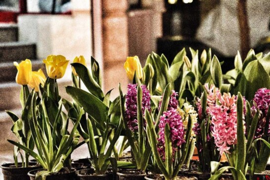""""""" پریسا نورمحمّدی """" هنرمند و دانش آموخته ی آکادمیک رشته عکاسی / گزارش مصوّر از بهار و نوروز 1399"""