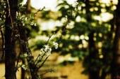 « پریسا نورمحمّدی » کارشناس عکّاسی با « قلمِ دوربین » روایتگر نُزهت بهار