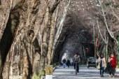 ساخت هتل در حریم چهارباغ اصفهان، قانون یا عبور از آن