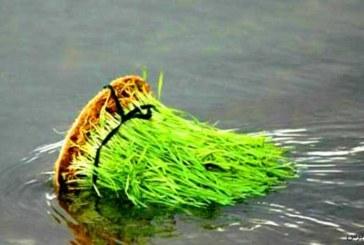 چرا برخی رفتارهای ضد محیط زیست دارند؟ ( لقمان امامقلی جامعه شناس محیط زیست و عضوشورای مدیریت سبز دانشگاه کردستان )
